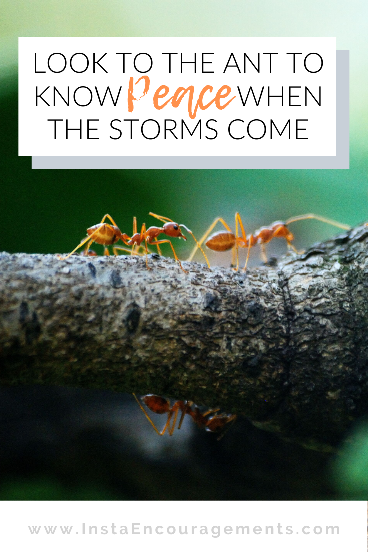 ​Look to the Ant to Know #Peace When the Storms Come: A young man applied for a job as a farmhand. When asked for his qualifications, he said,